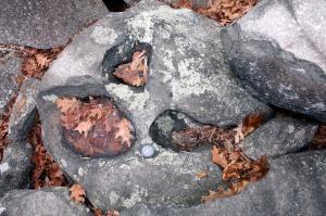 Pot holes scoured in a diabase boulder in Ringing Rocks boulder field